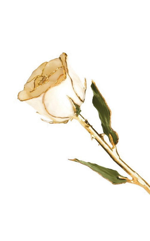 Albert's Gold Dipped White Rose GP9340 product image